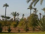 Terrain de 1 Ha (10,000m2) | Titre | Permis de construire | Marrakech Palmeraie