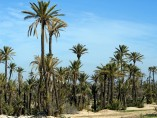 Terrain de 1 Ha | Titre | Marrakech Palmeraie